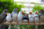 substance-shutter49836046-finches-on-branch