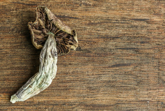 substance-shutter283068347-magic-mushrooms-on-table