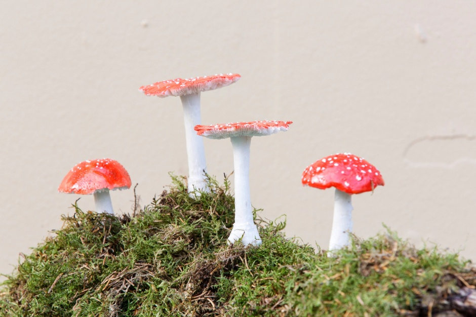 Amania Muscaria (Magic Mushrooms)